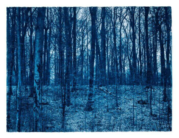 "PRUSSIAN BLUE FORREST 2018 Cyanotype on ARCHES® Platine 57x77cm (22x30"")"
